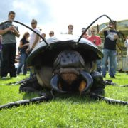 Big Bugs Show at -A Day at the Park- 10 Final Edition