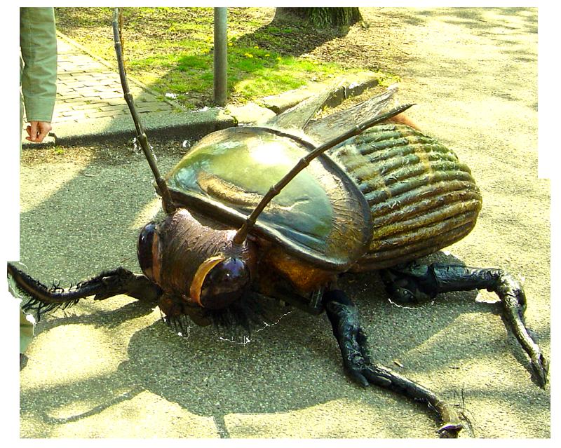 Big Bugs Show - Jewel Beetle